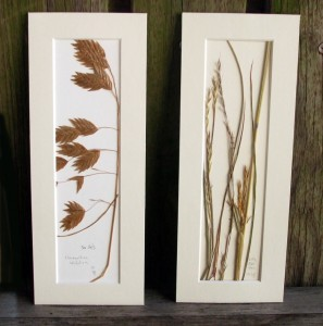 Sea Oats, Little Bluestem, Brigid Greene