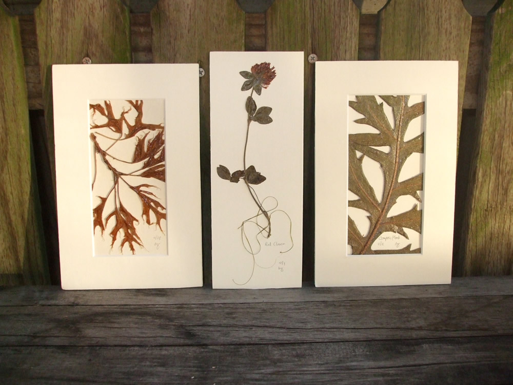 Native plants on thank you cards, eco-art cares