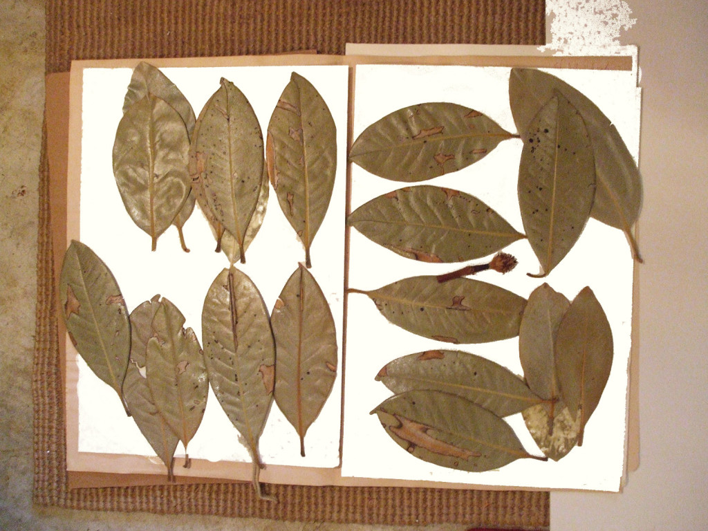 preserved plants for art